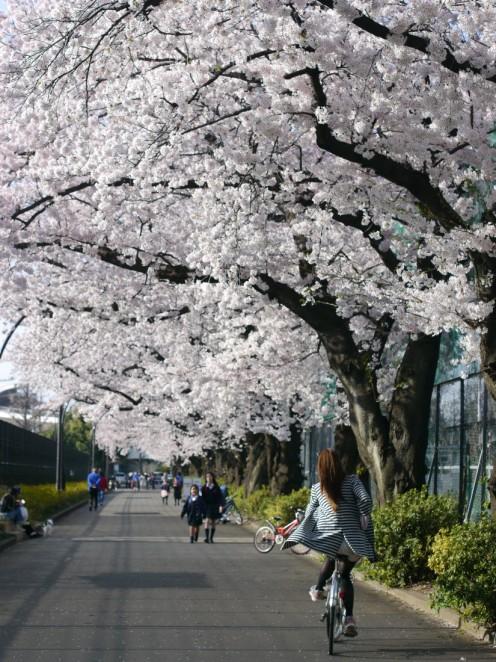 nakae-yuki-hanami-IM1D5-050