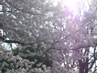 nakae-yuki-hanami-P1290330-032